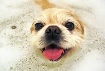 Dog Grooming / Keep your pooch looking and feeling great!