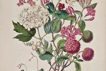 Botanicals / by Anna Scott