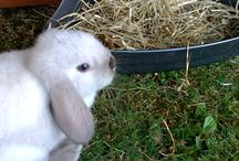 Bunny / Benji