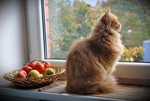 esencia de gatos