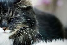 I love cats and other animals / by Di