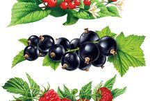 grafika owoce warzywa grzyby