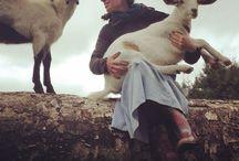 Piebird Farm Sanctuary / Vegan Farmstay / Animal-friends!