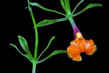 Storczyki - orchids
