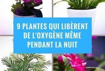 Plantes bénéfiques
