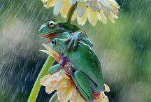 natura piękne zdjęcia