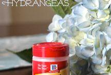 floral tips