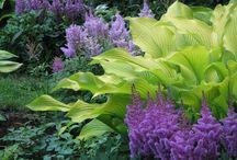 Plante d'ombre