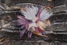 Handmade flowers designer Alina Yo