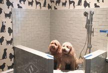 Dog Shower