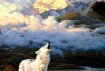 Arctic / Arctic Foxes Arctic Wolves Snow Leopard