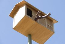 owl box and bird nest