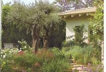 My Mediterannean Garden