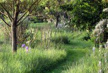 chemin hautes herbes