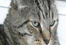 Les chats / Les chats en carte postale sur http://bretagne-web.fr/cartes-postales