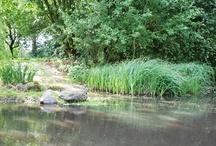 Blütenmeer 07 | 2012 / Die Flora rund um die Agentur zeigt sich in diesem Jahr besonders bunt. Das gibt uns Kreativitäts- und Motivationsschübe.