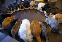 Cats Cats Cats  / by DeLona Naron