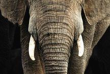 Elephants...♡