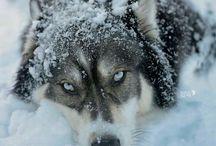 WOLF my spirit ○•○