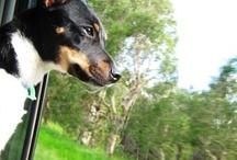 My Dog!!!!