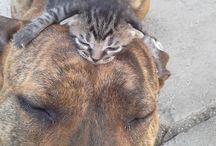 gatti / gatti