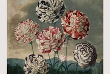 Flora / #botanical #flower #illustration