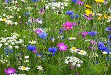 Gardening-wildflowers