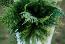Fern Wedding - Greenery