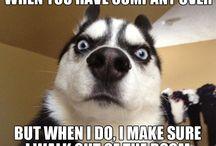 Funny animal sayings / So cute