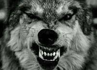 Wolf!❤️