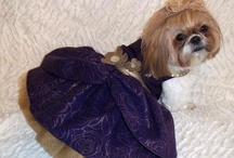 Mocha / Mocha is a fashionista! She is a happy dog with an adorable overbite that loves to make people smile. She loves going to visit people in need and putting a smile on their faces. Her favorite person to cheer up is her owner, who met her when she needed her most. A few months before, her daughter Angela was killed in a tragic car accident. Mocha came into her life and spread her cheerful light during a tragic, dark time.  Enjoy getting to know this adorable dog, one of our Faces of DOGTV!