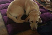 Alpacables Pet Beds