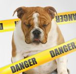 Dogs danger food & info / Info on dangerous food for dogs and general dog tips