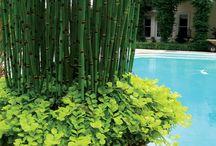 Plantas De Vaso