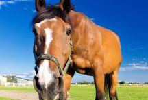 DIY paardenverzorging