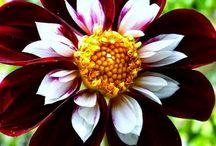 flowers / by Paula Hurd