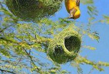 Muhteşem kuş yuvaları