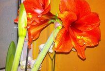 Moje květiny
