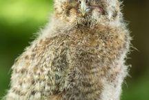 Owls / Owls for sale - Owl bags - Owl Toys - Owl Ornaments - Owl Keyrings - All kinds of owls