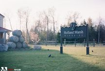 Vineyard & Grounds at Holland Marsh Wineries / Photos in and around Holland Marsh Wineries - located in Newmarket Ontario.