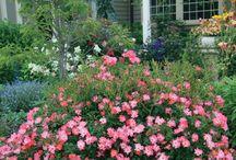 Mój śliczny ogródek