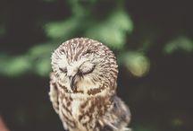 Owl Wedding / by Annalei Winder