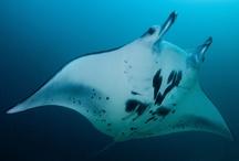 Lautan Kita  / Lautan kita menyediakan sumber pangan dan oksigen yang berlimpah ruah. Namun keindahan laut kita terancam oleh penangkapan ikan berlebihan, pemanasan global dan polusi. Lindungi lautan kita di www.defendouroceans.org
