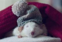 adorable animals / by Kylee Neuberger