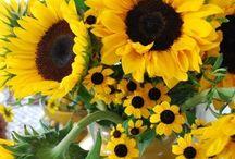 Sunflowers!!