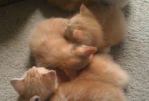 kittens :) / #kittens4ever!!!
