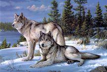 wolf - Волк