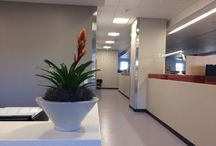 Indoor Plant Decor / Plants are great for spicing up an environment. Many of the best plants for indoors also double as air purifying plants. Overall, having plants in the office or lobby can offer multiple benefits to everyone.