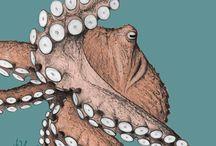 octopus / by Robin DeLisle