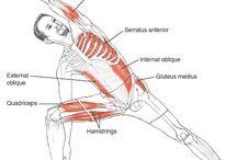 health  : yoga anatomy